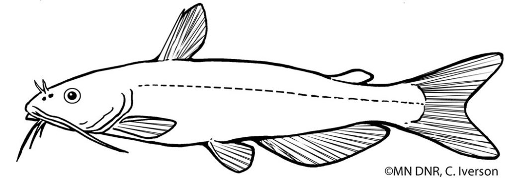 Coloring Pages : Great Lakes Aquarium
